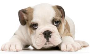 puppy_kooistra